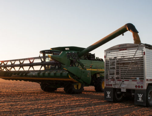 It's Harvest Time:  Maintain the Value of Your Pulse Crops
