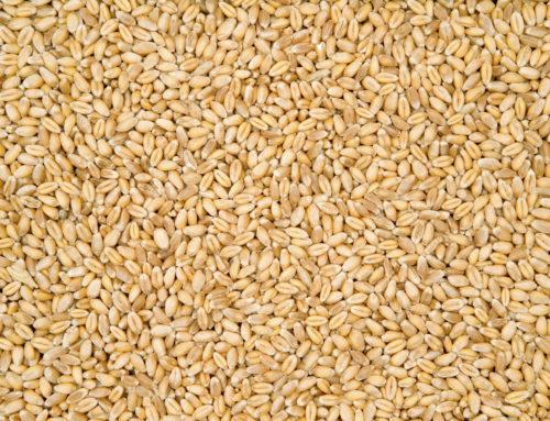 Grain Grading